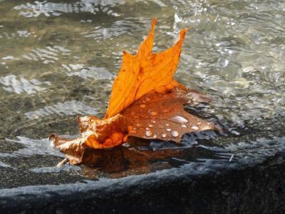 Mindfulness en fotografie, een prachtcombinatie!