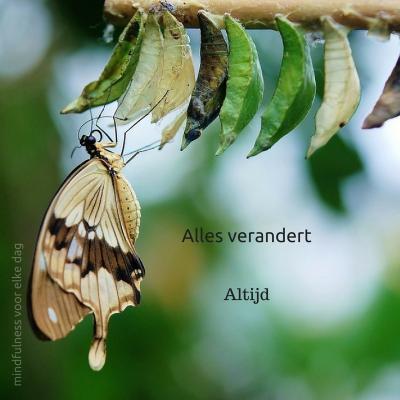 verandering, vlinder