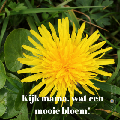 bloem mindfulness