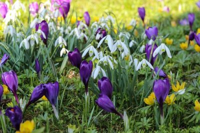 Zie de lente