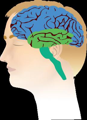 Mindfulness en de drie lagen in ons brein