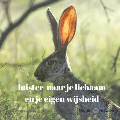 Luisteren naar je eigen wijsheid